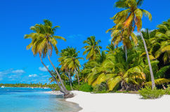 Caribbean beach with white sand and palm trees Stock Images
