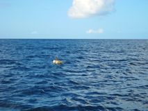 Caribbean Blue Sea Dominican Republic Stock Photography