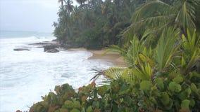 Caribbean coast in costa rica. Natural and wild caribbean coast in costa rica stock video
