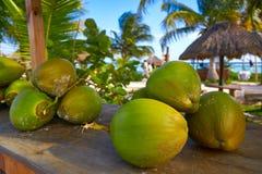 Free Caribbean Coconut Fruits In Riviera Maya Stock Photos - 102612743