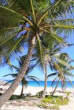 Caribbean coconut palm trees  tuquoise sea Stock Images