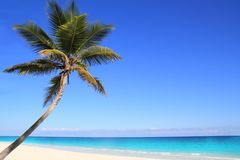Caribbean coconut palm trees in tuquoise sea Stock Photos