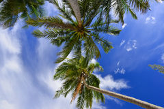 Caribbean coconut palm trees in tuquoise sea Royalty Free Stock Photos