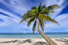 Caribbean coconut palm trees in tuquoise sea Stock Images