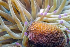 Free Caribbean Coral Garden Stock Images - 180835254