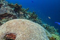 Free Caribbean Coral Garden Royalty Free Stock Photo - 186203905