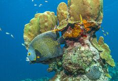 Caribbean Coral Garden Royalty Free Stock Images