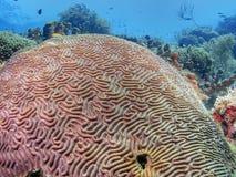 Free Caribbean Coral Garden Royalty Free Stock Photos - 188762298