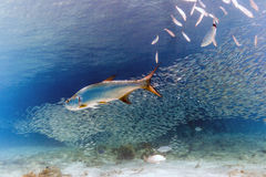 Free Caribbean Coral Reef Royalty Free Stock Images - 87022689