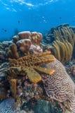Caribbean coral reef Stock Photos