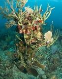 Caribbean coral reef scene Stock Image
