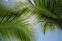Caribbean Dream. Palm trees in front of a blue caribbean sky stock photo