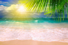 Caribbean Dream beach and palm leaf. Royalty Free Stock Photography