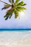 Caribbean Dream beach and palm. Royalty Free Stock Images