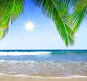 Caribbean Dream beach and palm. Royalty Free Stock Image