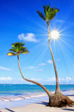 Caribbean Dream beach. Caribbean Dream beach and sunshine Royalty Free Stock Photo