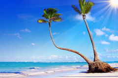 Caribbean Dream beach. Stock Photography