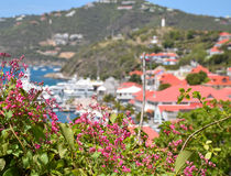 Caribbean Flowers - Saint Barthélemy Royalty Free Stock Photography
