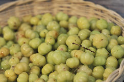 Caribbean food: unripe acerola. Unripe acerola (Malpighia glabra), also known as Sour or Barbados cherry, are used as an ingredient of some caribbean food Royalty Free Stock Image