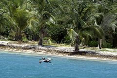 Caribbean, French West Indies, Guadeloupe island, sailing along Royalty Free Stock Photo
