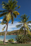 Caribbean harbor surrounded by Coconut palm trees Stock Image