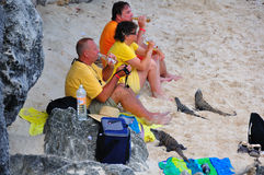 Caribbean Iguanas and Tourists, Mexico. Caribbean Iguanas harassing tourists for food and some beer on the beach of Tulum, Mexico royalty free stock image