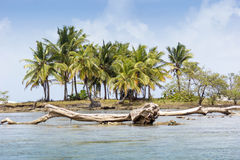 Caribbean Island. Made of basaltic rock and fallen tree trunk Stock Photos