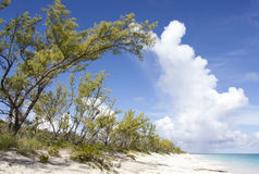 Caribbean Island Tree Royalty Free Stock Photos