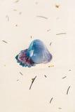 Caribbean Jelly Fish Stock Photo
