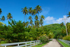 Caribbean Jungle Road Royalty Free Stock Image