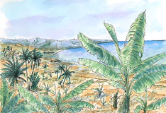 Caribbean landscape with banana and palm trees. Ink and watercolor on rough paper Stock Photography