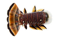 Caribbean Lobster Royalty Free Stock Image