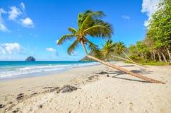 Caribbean martinique beach coconut near the Diamant. Caribbean martinique beach coconut in the region of `le Diamant`nnear of the Diamant rock Royalty Free Stock Image