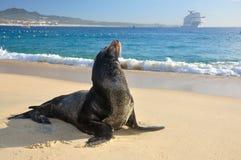 Caribbean, Mexico beach resort Stock Photo
