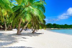 Caribbean palm beach stock image