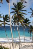 Caribbean palm beach Royalty Free Stock Images