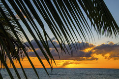 Caribbean Palm Sunrise Royalty Free Stock Image