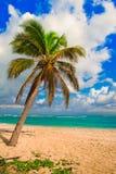 Caribbean Palm Tree Stock Photos
