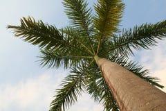 Caribbean Palm Tree Royalty Free Stock Image