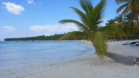 Caribbean palm tree Royalty Free Stock Images