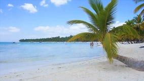 Caribbean palm tree Royalty Free Stock Photos