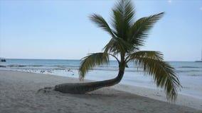 Caribbean palm tree Stock Image