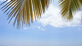 Caribbean palm tree Stock Images