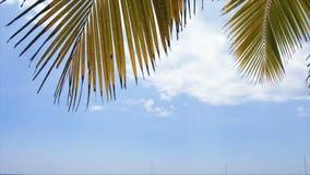 Caribbean palm tree stock video footage