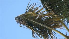 Caribbean palm tree Stock Photo