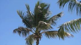 Caribbean palm tree stock footage