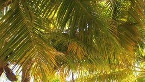 Caribbean palm tree stock video