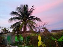 Caribbean Palm tree Royalty Free Stock Photography