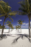 Caribbean Palm Tree Runway Royalty Free Stock Images