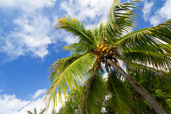 Caribbean palm trees Stock Photo